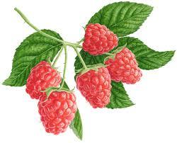 Fine art raspberry