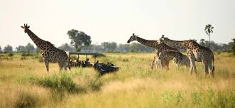 Inspirierende Zitate Die Uns Von Unserer Nächsten Afrikareise