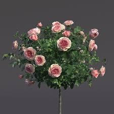 rose shtambovaya in a flowerpot 2 3d