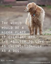 Dog Mans Best Friend Quotes