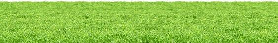 grass png. Brilliant Grass Nature  Grass On Grass Png