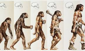 Ape Evolution Chart Ascent Of Man Image Is The Wrong Way Round Claims Expert