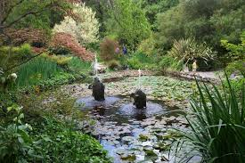 lily pond at descanso gardens
