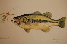 fish painting large mouth bass fish by lynn beazley blair