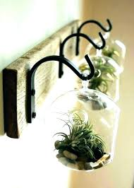 air plant wall display how to hang air plants air plant wall mount mounted containers terrarium
