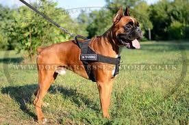 k9 dog harness for german boxer Ⓚ⑨ £36 09 boxer harness uk