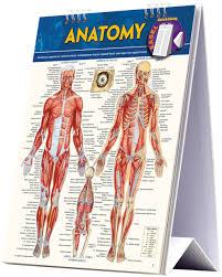 Anatomy Easel 9781423225836