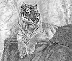 easy tiger pencil drawing. Perfect Pencil Drawn Tiiger Pencil Drawing 15 Inside Easy Tiger Pencil Drawing I