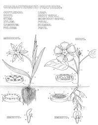 Coloring Pages Botany Botany Coloring Pages Coloring Books