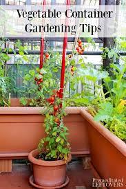 container gardening vegetables