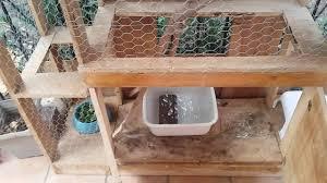 iguanas outdoor cage setup and food preparation