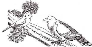 parrot essay elementary school persuasive essay bankruptcy essay parrot essay