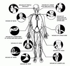 Pressure Point Chart Martial Arts