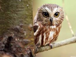 1080 x 1920 jpeg 344 кб. Cute Owl Wallpapers For Iphone Desktop Background