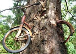Image result for broken push bikes