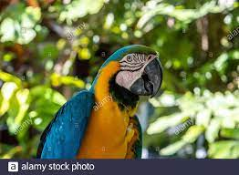 Polly Bird High Resolution Stock Photography and Images - Alamy