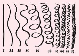Hair Type Chart Men How To Figure Out Your Curly Hair Type And Why It Actually