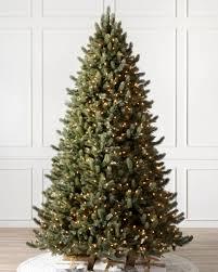 Vermont White Spruce Tree- child-1