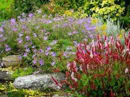Small Picture Cottage Garden Plants By Phillip Throughout Design Decorating