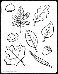 Herfst Kleurplaat Bladeren Afbeelding Bloemen Kleurplaat