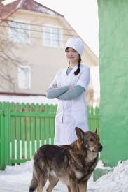 Veterinarian Technician Salary Vet Tech Vs Vet Assistant Schooling Jobs And Salary
