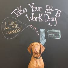 office pet ideas. To Celebrate Take Your Pet Work Day, We Asked Our Office Pets What Their Favourite Part Of Coming Is! Ideas
