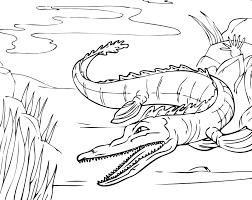 Dessin De Coloriage Alligator Imprimer Cp00733
