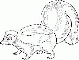 Small Picture Realistic Skunk Coloring Pages Coloring Home
