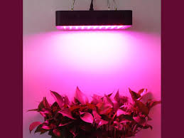 How Close To Keep Led Grow Lights Lightmetunnel 300w Led Grow Light Review Help Indoor