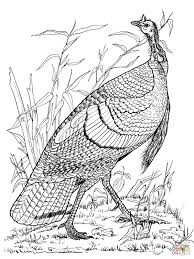 Adult Coloring Pages Thanksgiving Wild Turkey