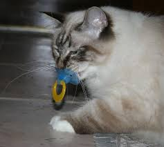 kitten with a pacifier