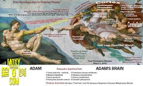 brain reconfiguration for metaphysical worlds in creation of adam painting
