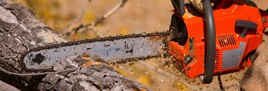best chainsaw. best chainsaw w