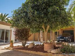 36 Palms Boutique Retreat Palm Luxury Retreat Spacious Villa Mediterranea 8161922