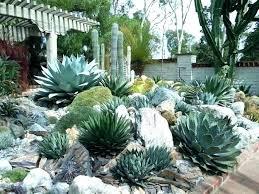 succulent rock garden succulent rock garden decoration photo 3 of 9 best outdoor cactus garden ideas
