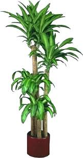 small office plant. Tall Indoor Plants Low Light Popular Plant Maintenance Office Awesome Small