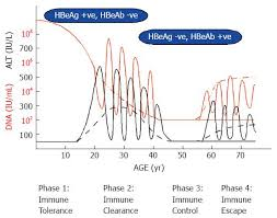 Natural History Of Chronic Hepatitis B Phases In A Complex