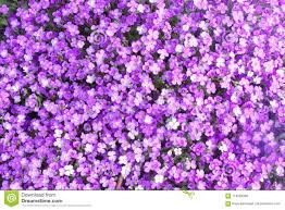 Purple Flowers Backgrounds Small Purple Flowers For Backgrounds And Texture Stock Photo