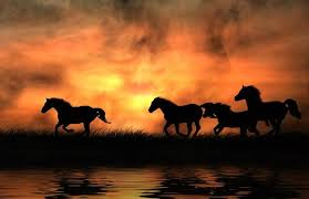 horses running in the sunset. Perfect Horses Horses Running  Keywords Sunset Horses Fire Horse Water Running  Orange  Throughout In The Sunset R