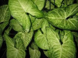 tattooed gardener top houseplants low light