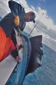 Florida Fishing Seasons Chart Florida Keys Charter Fishing Seasons Marathon Islamorada