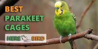 parakeet featured image