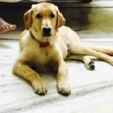 small breed dogs in hyderabad breed dogs picture