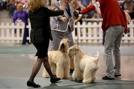 Dog show in Novi draws dogs best friends