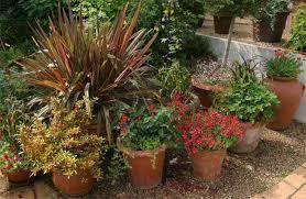 Container Garden  Wild About GardensContainer Garden Ideas Uk
