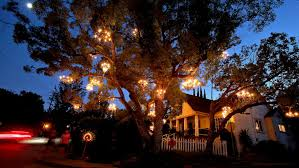 chandelier tree is a ling star in silver lake