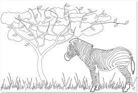 動物しまうまの大人の塗り絵の無料テンプレート素材 無料
