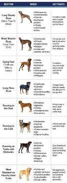 Dog Breed Exercise Chart Best Dogs For Running Put Your Shoes On And Have Fun