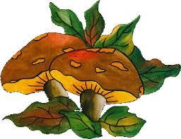"""Résultat de recherche d'images pour """"gifs de champignons"""""""
