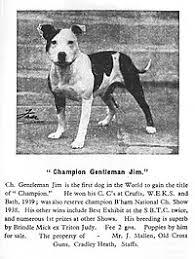 Staffordshire Bull Terrier Wikipedia